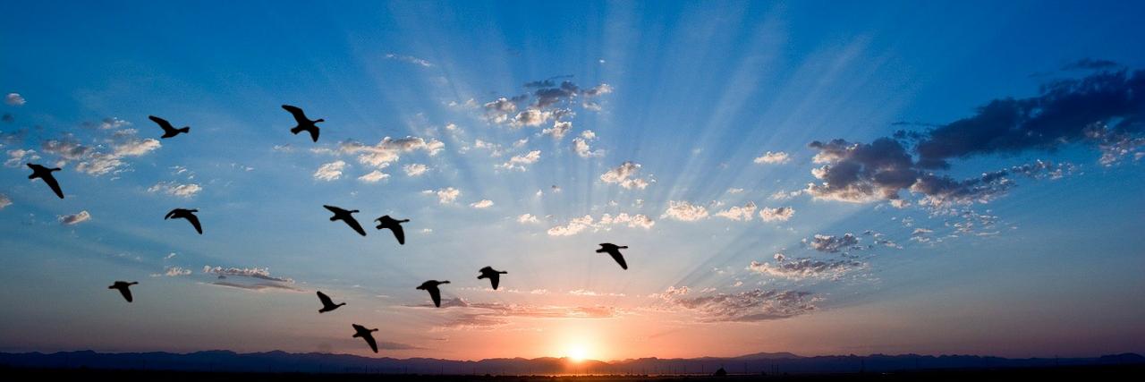 Julia Espinouse – Ouvrez vos ailes